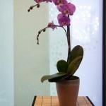 orchidoffice